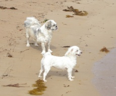 PRISSY AND TEDDY WAITING FOR RALPH 14 MAR 2014