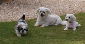RALPH, PRISCILLA AND TEDDY 2