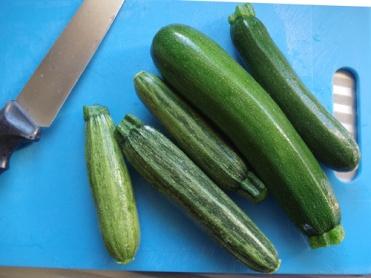zucchini 1b