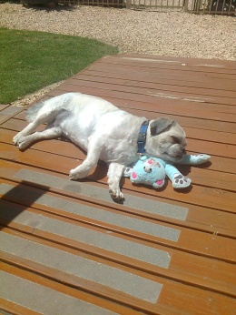 TEDDY AND BLUE TED
